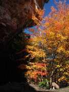 Rock Climbing Photo: Pretty fall colors behind the Colosseum.