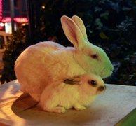 Rock Climbing Photo: bunnies!  In Istanbul