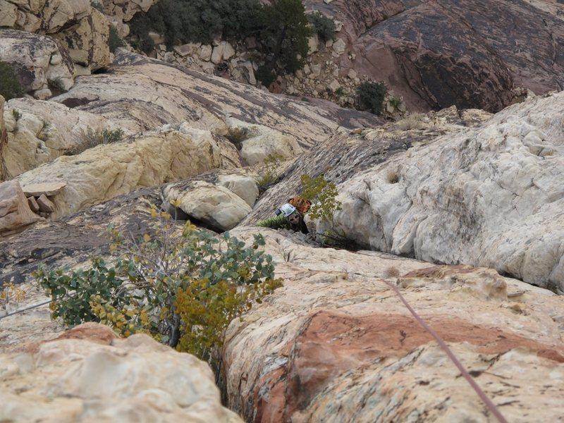 Rock Climbing Photo: Gigi hunts for birds on p4.