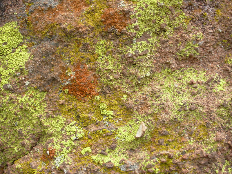 Rock Climbing Photo: lichen on rock