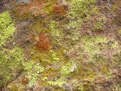 Rock Climbing Photo: lichen on rock