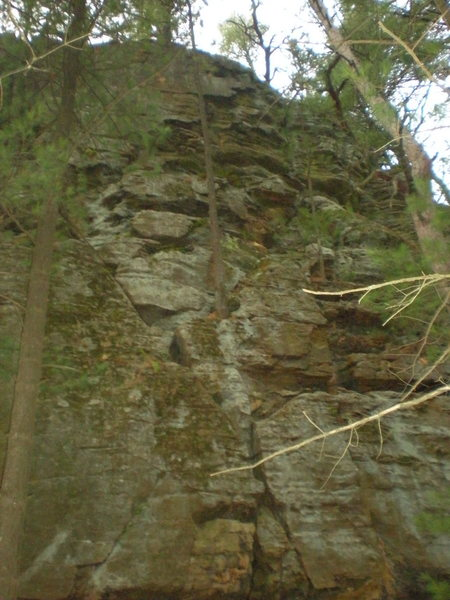 Rock Climbing Photo: The route, see the big pine tree? Climb to the lef...