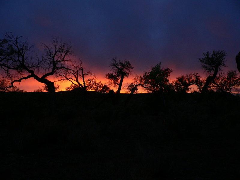 High Desert Beauty- Arizona