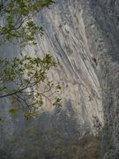 Rock Climbing Photo: the wave wall
