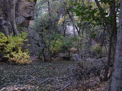 Rock Climbing Photo: The tired pup's gross swimming hole!