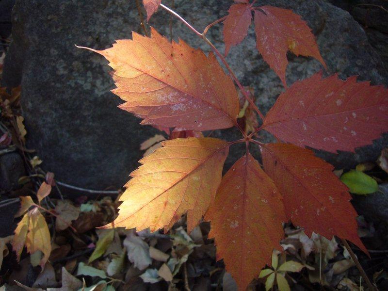 Rock Climbing Photo: Fall II in LDE