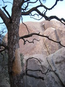 Rock Climbing Photo: Rico stepping right.