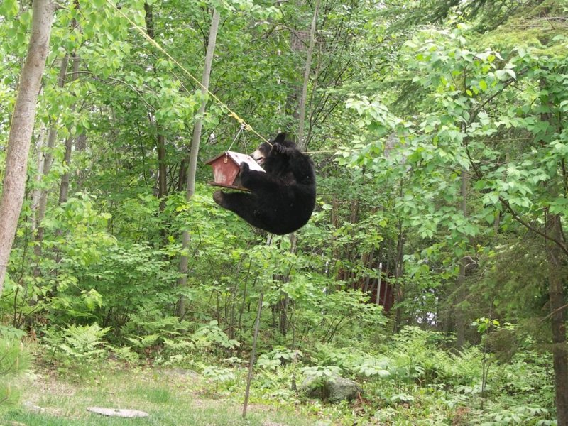 HEHEHEHE..... ALLLLLLLMOST THERE<br> <br> Bear Pic 3