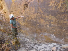 Rock Climbing Photo: Her exalted highness demonstrates how the big horn...