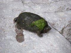 Rock Climbing Photo: turtle piss