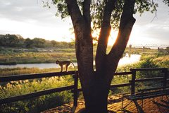 Rock Climbing Photo: Sunset - Kruger National Park South Africa 2001.