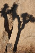 Rock Climbing Photo: Only a shadow of himself...
