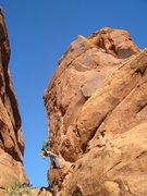 Rock Climbing Photo: Jake Warren rappelling from the Tower feature on M...