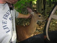 Rock Climbing Photo: The deer