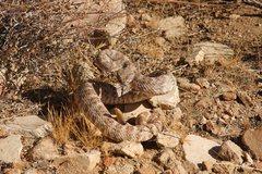 Rock Climbing Photo: Wildlife