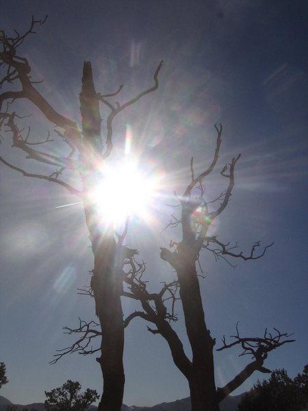 Winter desert tree.