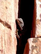 Rock Climbing Photo: Lizard staying cool in June 2004, Kraft Boulders.