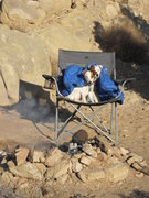 Rock Climbing Photo: The terriers take over prime seat.