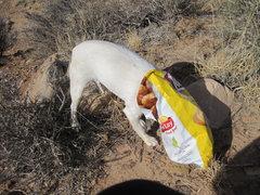 Rock Climbing Photo: Bess indulging in her favorite snack