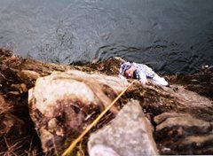 Rock Climbing Photo: Jams Dailey on 'Wendy's Phing', 5.7.  Water start ...