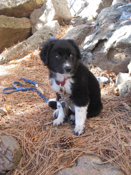 Pipers' first day at the crag...Today I'm thankful for her, she makes pretty much everything cooler.