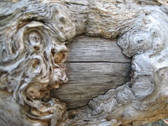 Rock Climbing Photo: Dream wood.