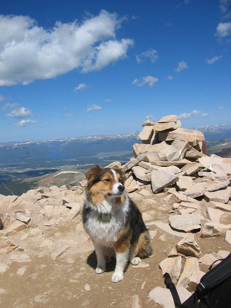 Bear on the summit of Mt. Sherman.