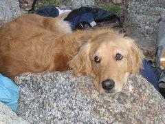 Rock Climbing Photo: Riley given me a spot
