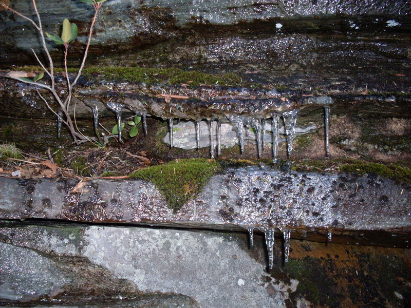 Rock Climbing Photo: Cold AM icicles