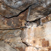 Wood rat in his rocky home at the bottom of Maple Wall.