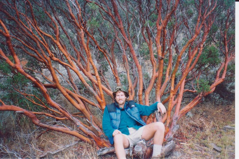 Sitting comfortably in a grand manzanita specimen