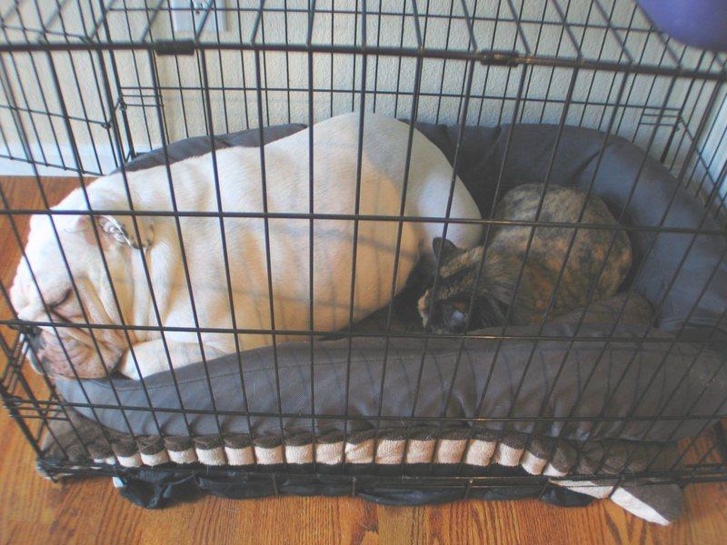 Patra sleeping with Vesper