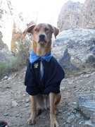 Rock Climbing Photo: jumar hanging at the crag.(animal abuse)