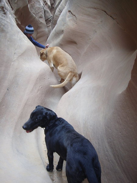 First canyoneering trip for the mutts
