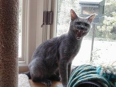 Rock Climbing Photo: Scary Cat!