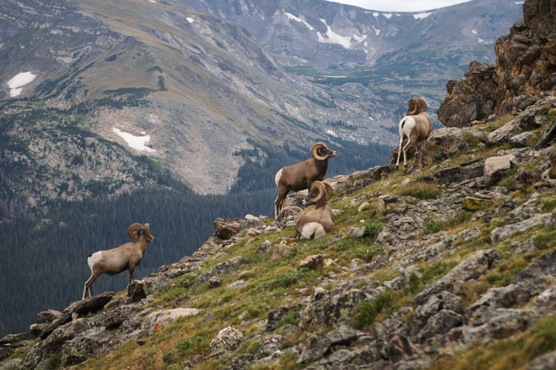 Local climbers in Colorado's Rocky Mountain National Park.