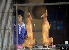 Rock Climbing Photo: Dog Meat - Thailand