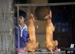 Rock Climbing Photo: Dog Meat - Thailand