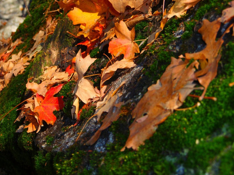 Rock Climbing Photo: Fall leaves