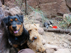 Rock Climbing Photo: Pipin, Chewy and (a very tired) Toofast after a da...