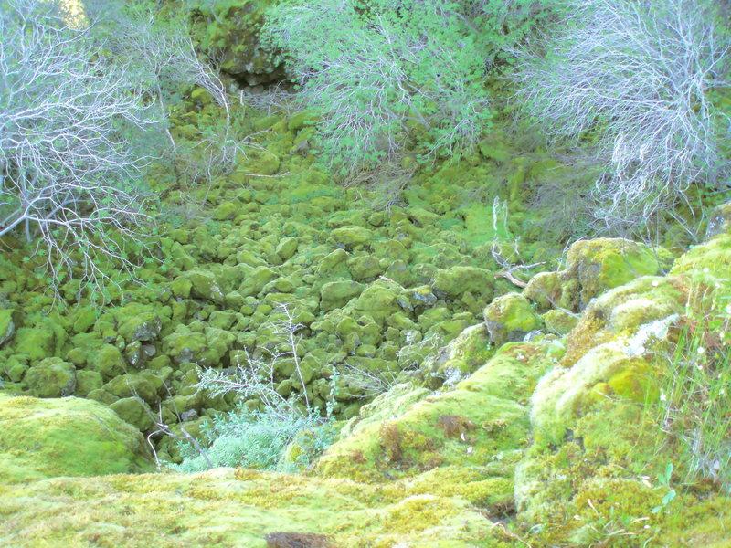 Rock Climbing Photo: Mossy