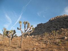 Rock Climbing Photo: Some scenery on the way to the Embryo Area, Joshua...