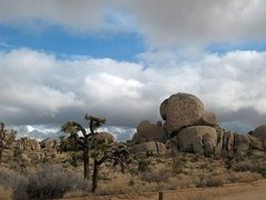 Rock Climbing Photo: Mission Rock, Joshua Tree NP