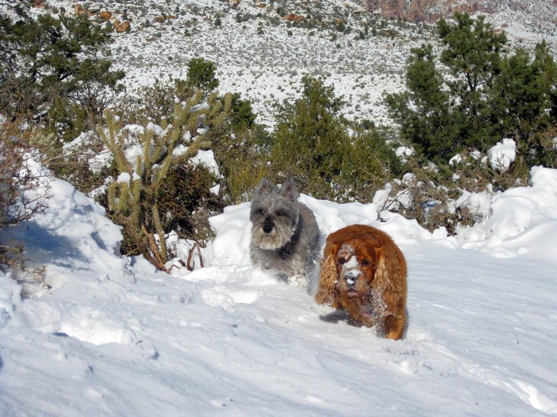 Enjoying the snow from last nights storm. The snow is short-lived in Red Rock@SEMICOLON@ it had already melted down quite a bit in the warm, bright sun on our hike out. These two were making the best of it on our hike in. : )<br> <br> Taken 12/8/09