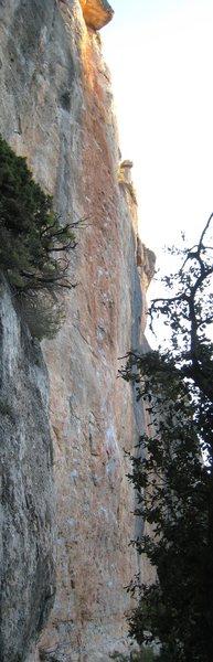 Mandragora climbs the heavily chalked orange streak, finishing just above the high roof.