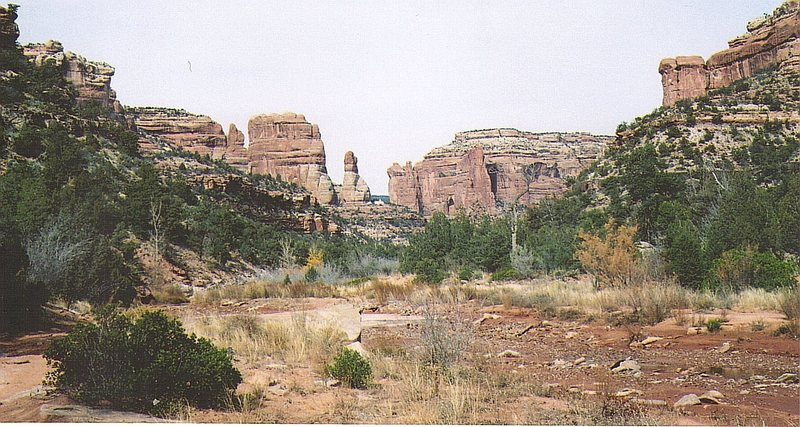 View up Arch Canyon