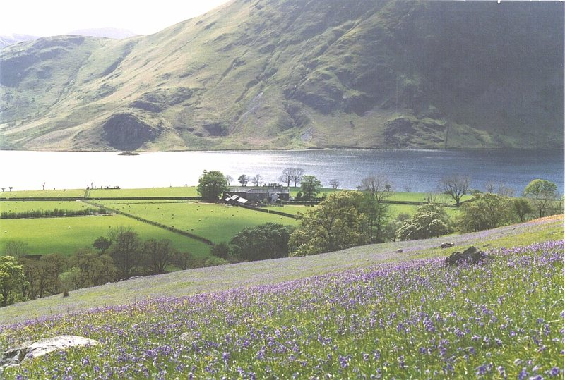 Looking over a field of Bluebells to Buttermere Lake in the Buttermere Valley about 8 miles from the town of Keswick