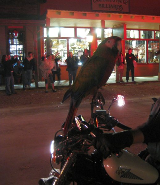 A friendly, chatty parrot, and his daddy at the Christmas parade in Tombstone, AZ. A fun night, and a nice place to stop off in after climbing in Cochise Stronghold.<br> <br> 12/13/09