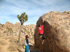 Rock Climbing Photo: Grabbing the lip on Ziggy (V3), Joshua Tree NP