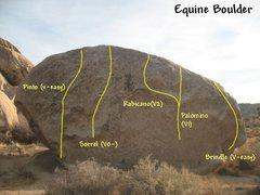 Rock Climbing Photo: Photo/topo for the Equine Boulder, Joshua Tree NP.
